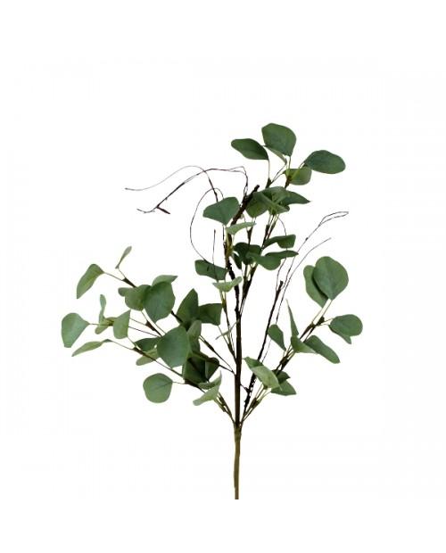 """Šakelė """"Eucalyptus"""""""