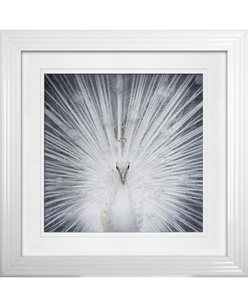 """Paveikslas """"Albino Peacock"""""""