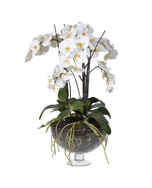 """Gėlė vazoje """"White Orchid Phalaenopsis"""""""