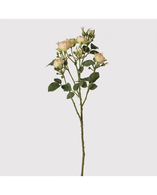 Smulkiažiedžių rožių šakelė
