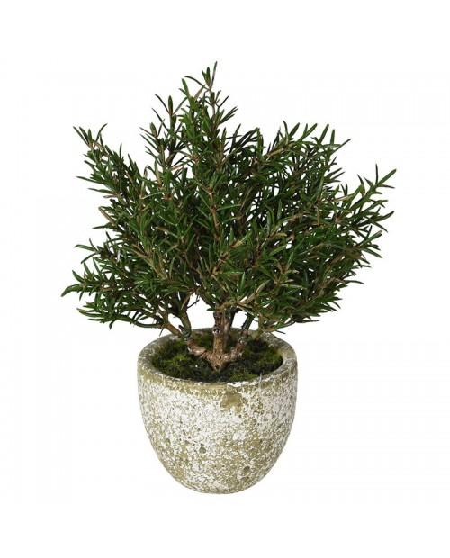 """Dirbtinis augalas """"Rosemary"""""""