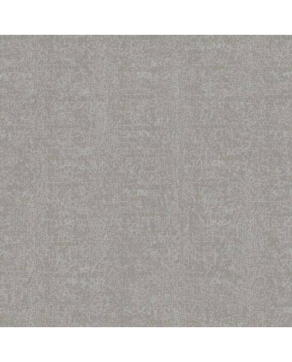 Burmese Grey