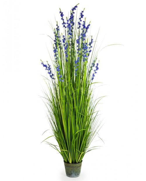 """Žydinti gėlė vazonėlyje """"Blue"""""""
