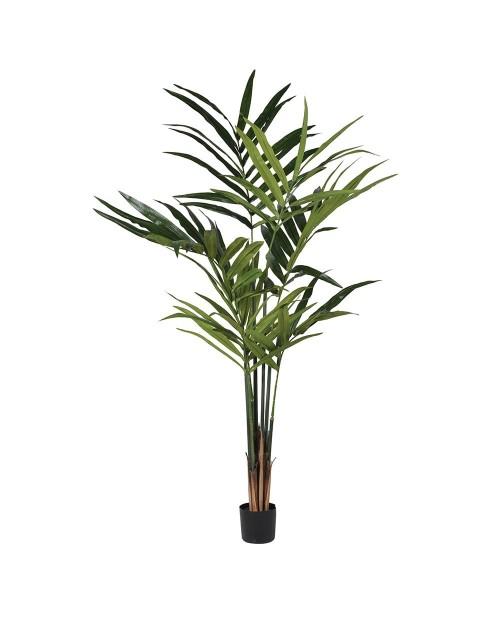 "Gėlė ""Green Kentia"""